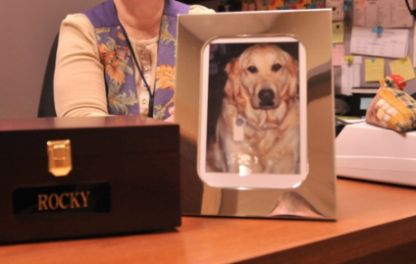 Honoring Fido's Memory: Letting go and grieving the loss of a beloved dog