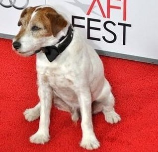 'Artist' star Uggie the dog announces his retirement