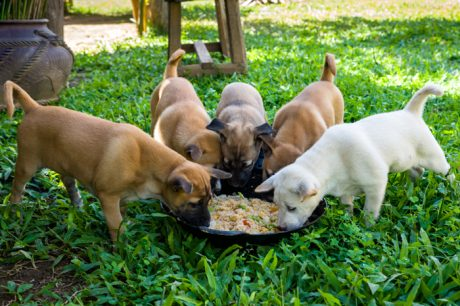Feeding A Puppy – A Complete Guide