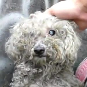 Blind dog rescued, has vision restored