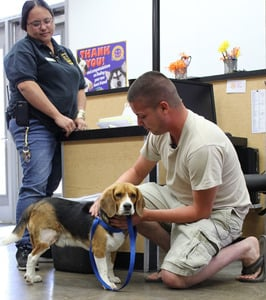 Owner and Beagle reunite after shelter scans microchip