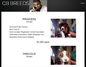 Singer Chris Brown selling Pit Bull puppies online