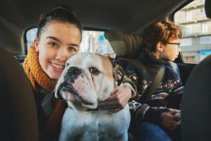 Dog Car Sickness: Causes, Symptoms Prevention