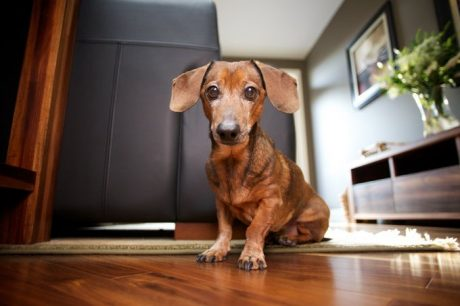 Incontinence In Dogs: Causes & Prevention