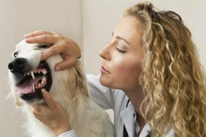 Dogs And Gum Disease: What You Need To Know