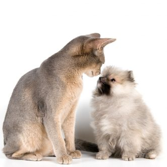 Before a new dog meets the resident cat