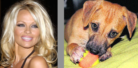 Photo of Pamela Anderson & her Dog Pyari