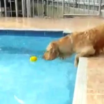 Dog wants the ball