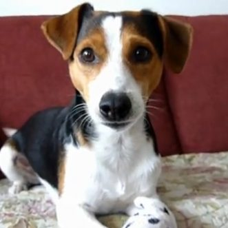 DogTime's video of the week: July 6, 2012