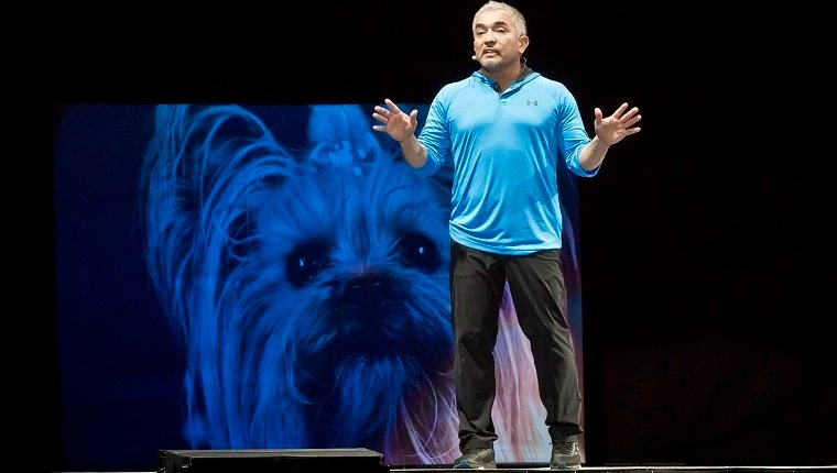 BERLIN, GERMANY - MARCH 04: American dog trainer Cesar Millan performs live during his show at the Max-Schmeling-Halle on March 4, 2017 in Berlin, Germany. (Photo by Frank Hoensch/Getty Images)