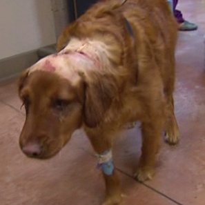 Man gets maximum sentence for attacking neighbor's dog
