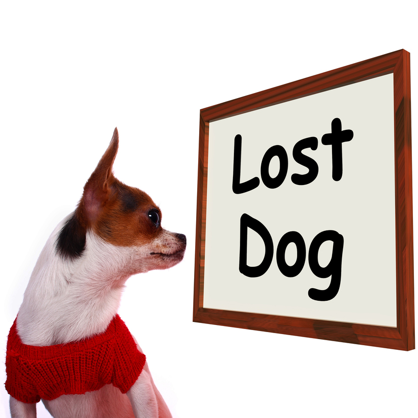 10 Funny Missing Pet Signs Dogtime