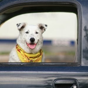 Do pet seat belts really work?