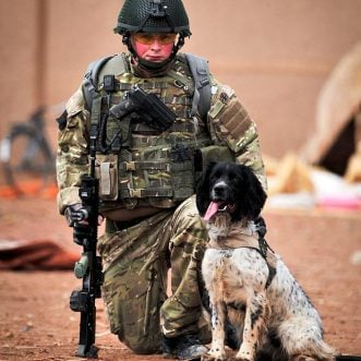 British army dog honored posthumously with PDSA Dickin Medal