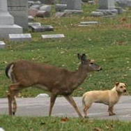 Friendship between dog and deer ends in poignant rescue