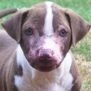 Check in with Freddy, the Pit Bull burned by acid
