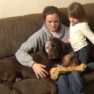 Cancer-stricken dog saves family from fire