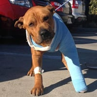 L.A. police officers take in dog hit by car