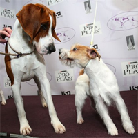 The Westminster Dog Show begins today