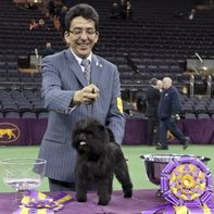 WKC Dog Show ribbon awarded to champion Affenpinscher