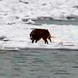 Kayaker rescues dog stranded on icy Lake Michigan
