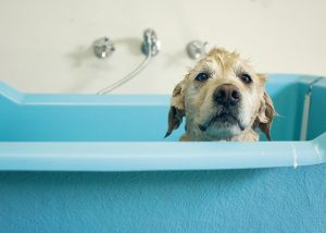 How To Give A Dog A Bath