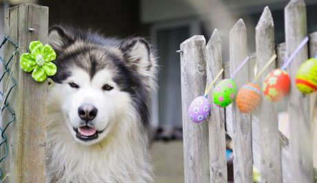 25 Easter Dog Pictures To Make You Smile