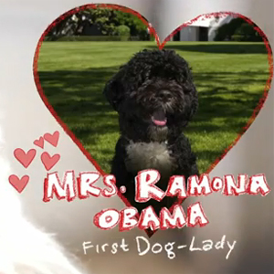 Shelter pup asks First Dog Bo Obama to special event