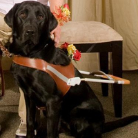 Couple who saved guide dog inspired to help others