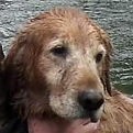 Kayaking couple rescue lost dog from river