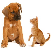 Being a pet parent may cut risk of heart disease
