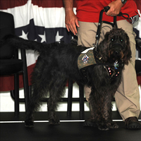 Rescued Labradoodle helps wounded veteran