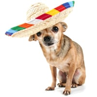 On May 18, get the Whole Enchihuahua