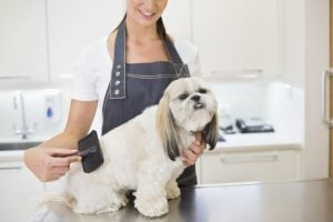Finding The Right Dog Groomer