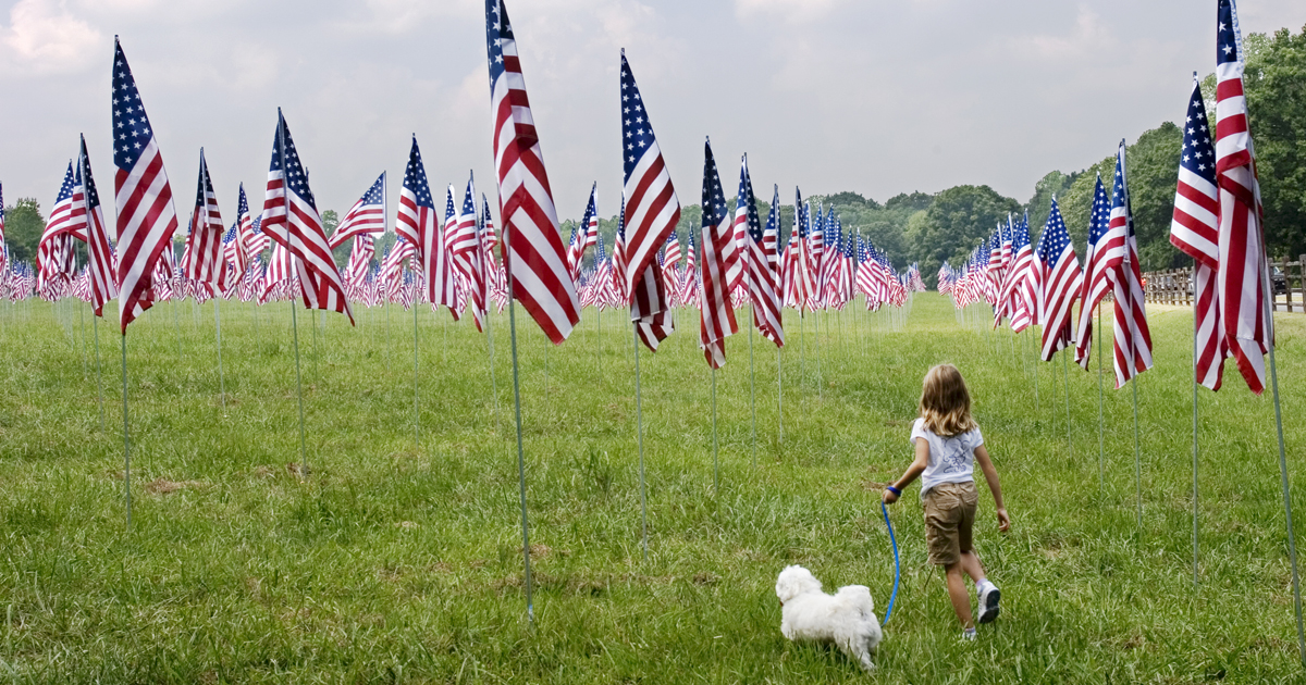 25 dogs celebrating Flag Day - Dogtime American Water Spaniel Dogtime