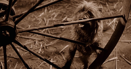 Five iconic American dogs and their tales - Dogtime