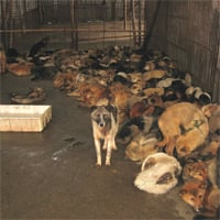 Dogs rescued from hoarder need more rescuing