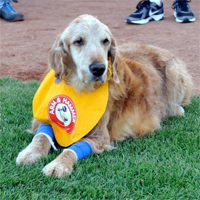 Famous minor league bat dog Chase dies