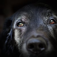 Photographer devotes work to promote senior shelter dogs