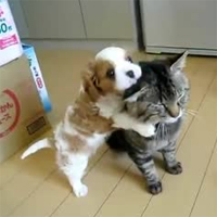 DogTime video of the week: Puppy loves cat