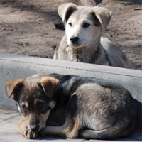 Romania still tries to kill its way out of stray dog problem