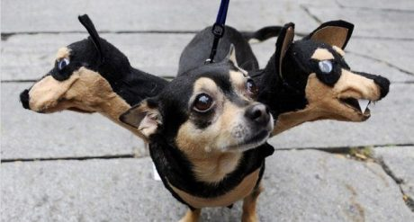 30 Awesome Dog And Cat Halloween Costumes