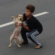 Boy risks life to save dog hit by car