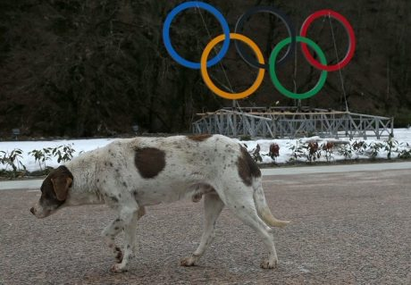 Stray dogs executed ahead of Sochi games