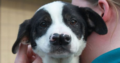 Kentucky dog with two noses finds forever home