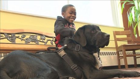 Failed service dog becomes best friend to Colorado brothers