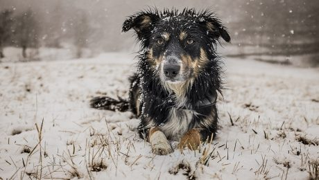 Hypothermia In Dogs: Symptoms, Causes, & Treatments