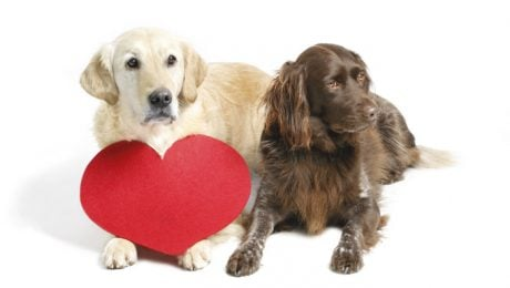 10 Ways To Show Your Dog You Love Them On Valentine's Day
