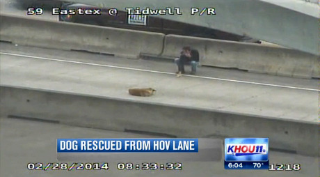 Man rescues injured dog from Houston freeway - Dogtime