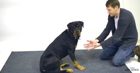 Hilarious dog reactions as magician makes treats disappear